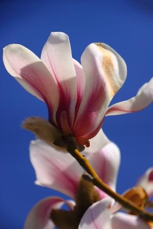 gardenia: Gardenia close-up