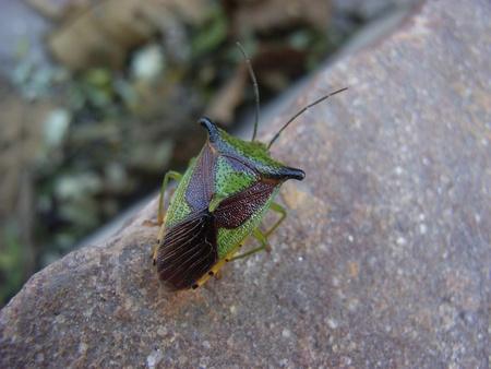 entomological: Beautiful Beetle