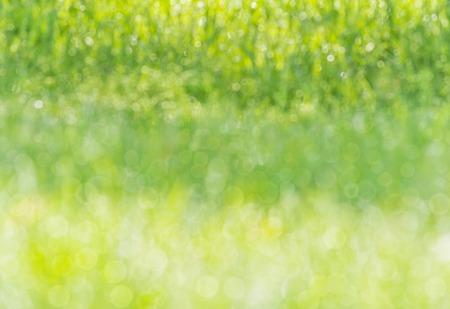 glistening: blurred background wet grass in a meadow, dew glistening with sunlight, bokeh