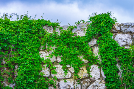 background texture old stone wall covered with plants against the sky