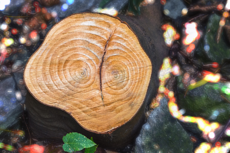 a tree stump resembling a face with eyes, on a blurry background with a bokeh effect