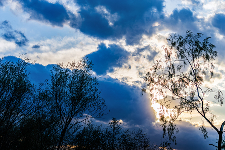 trees silhouetted against the evening sky, sunlight streaming through dramatic clouds, sunset and sunrise Stok Fotoğraf