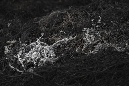 dark background ashes from burnt grass in a meadow