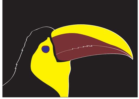 keel: a head of keel bill toucan