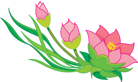 oriental flowers, water lily Vector