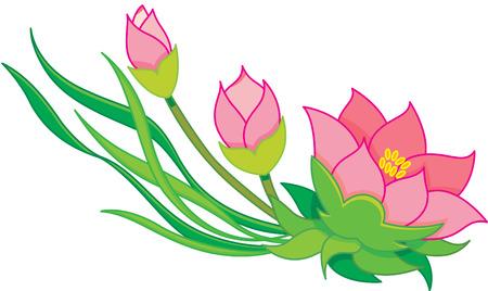 oriental flowers, water lily