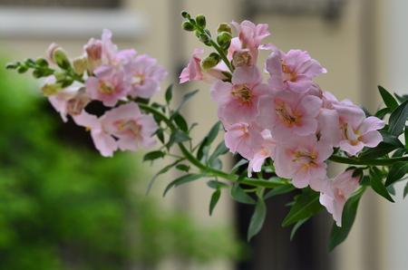 bloom: flowers in full bloom Stock Photo