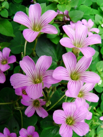 Purple flowers Stock Photo - 10413621
