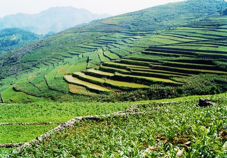 terracing: Sichuan countryside views