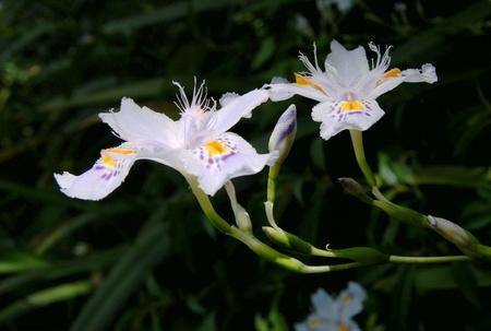 niyama: Danshan wild plants Stock Photo