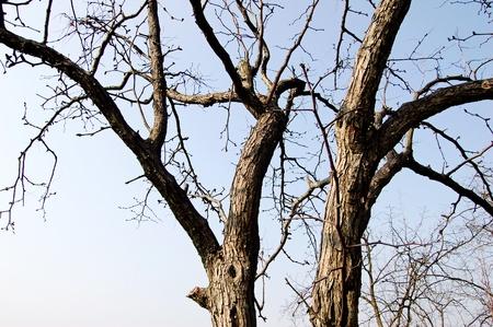 xuyong: The old tree