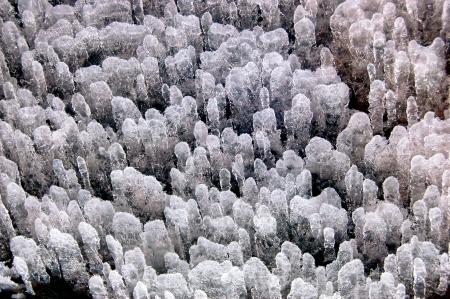snow break: Ice flower,  Stock Photo