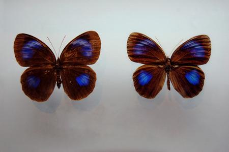 turismo ecologico: La mariposa  Foto de archivo