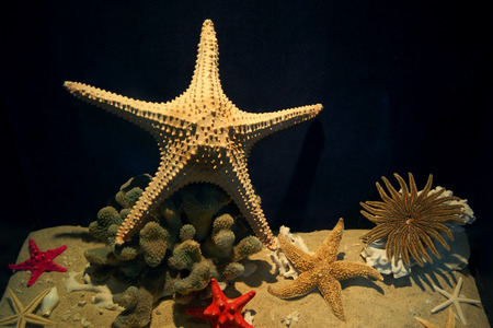 ecological tourism: estrellas de mar