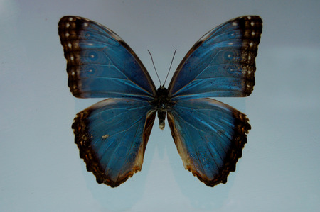 turismo ecologico: Butterfly