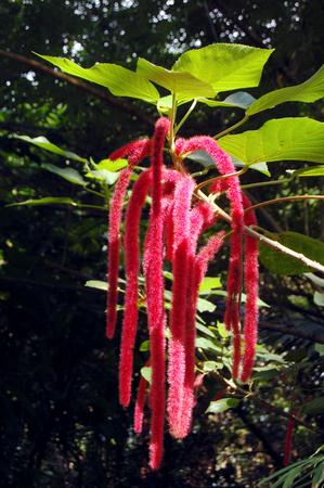 turismo ecologico: Cierre hasta una planta tropical