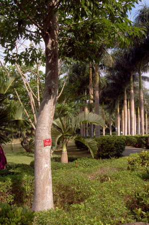 tropical plants: Tropical plants Stock Photo