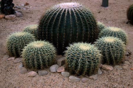 turismo ecologico: Cactus Foto de archivo