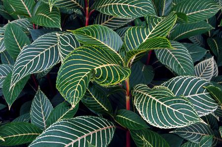turismo ecologico: Plantas tropicales