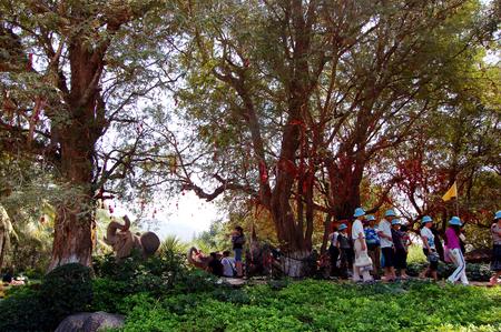 ethnic customs: Wish tree