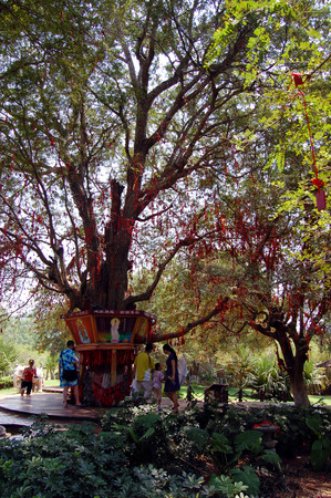 the humanities landscape: Wish tree