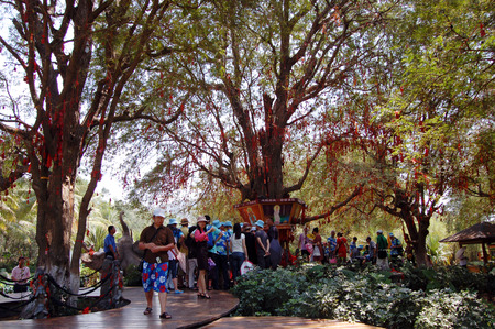 visitors area: Wish tree