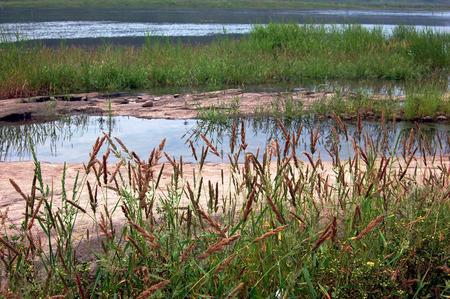 south sichuan: Tuojiang river wetland Stock Photo