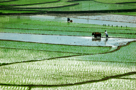south sichuan: Spring view of the field Stock Photo