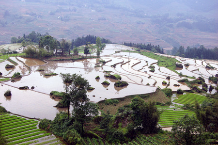south sichuan: The spring field