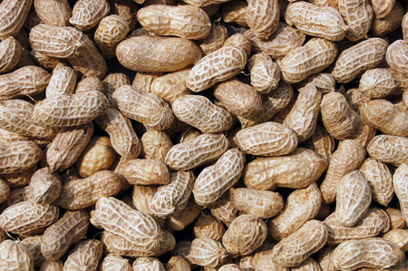 protein crops: Close up to groundnuts