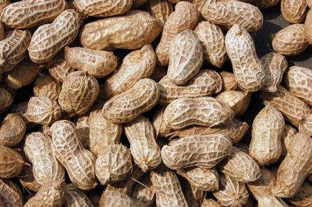 leguminosae: Close up to groundnuts