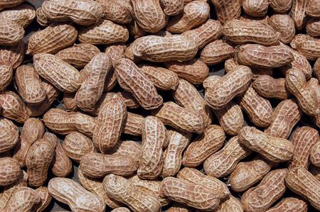 leguminosae: peanut Stock Photo