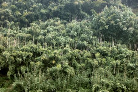 xuyong: bamboo Stock Photo