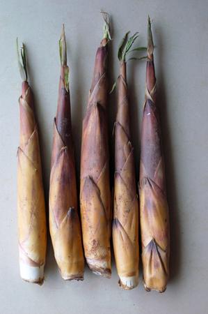 shoots: The bamboo shoots