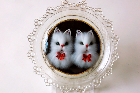 glass plate: two cats in the glass plate