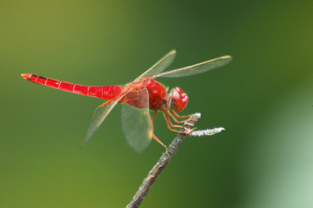 sunshine insect: dragonfly