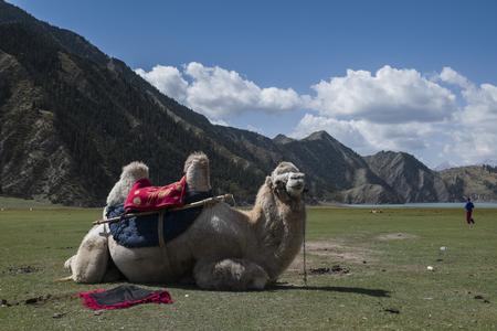 xinjiang: Xinjiang grassland