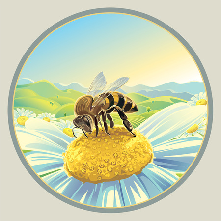 honeybee: Bee on a flower Illustration