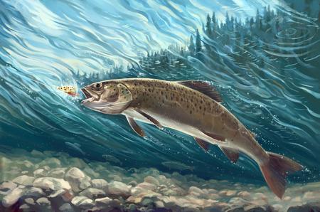 Siberian trout Standard-Bild