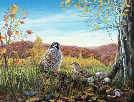kuropatwa: Dwa ptaki w lesie jesienią Zdjęcie Seryjne