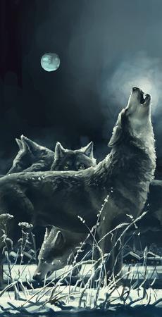 オオカミ 写真素材