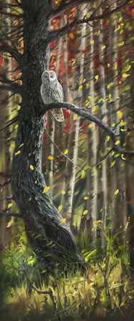 grove: Owl in the autumn forest