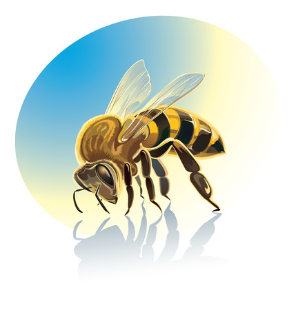 insect flies: Bee illustration. Isolated objects. Illustration