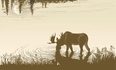 Elk en el agua potable. Paisaje de la noche. Foto de archivo - 44244626