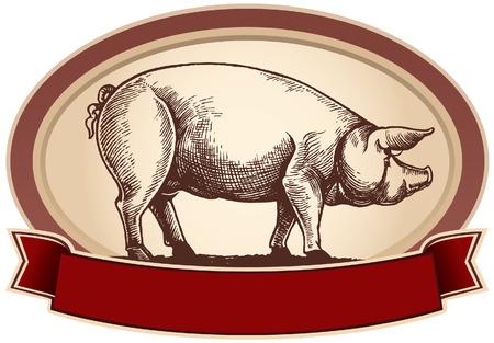 cerdos: Cerdo gráfica, en el marco con la cinta. Vector objeto etiqueta o marcas registradas. Vectores