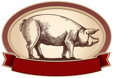 Graphical pig, in frame with ribbon. Vector object to label or trademarks. Illustration