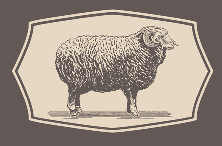 bighorn: Graphical Ram, Sheep Illustration