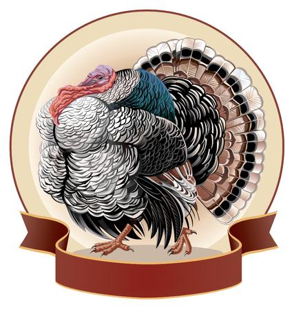vector illustration  hen: Turkey-cock in landscape. Vector illustration.