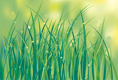 chlorophyll: First shoots of a grass on a lawn. Flowers background.