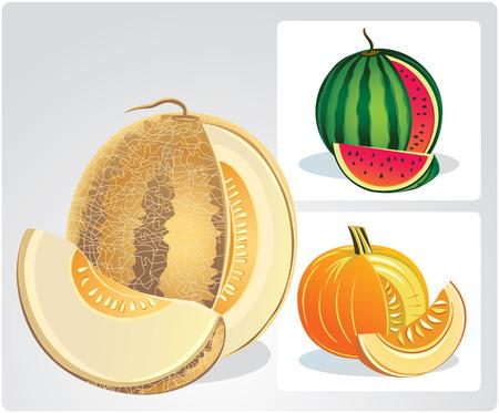 objects: Melon, watermelon, pumpkin. Vector objects.